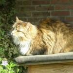 kat in het zonnetje